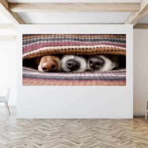 Canvasdoek honden