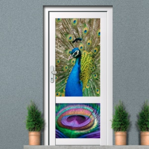 Raamfolie voordeur kleuren pauw